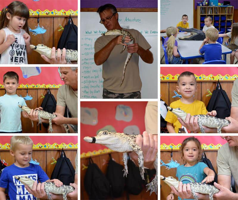Alligator facebook